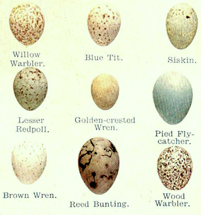 eggs-section